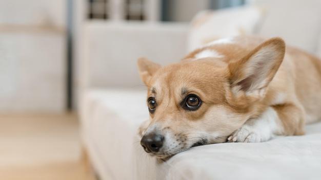 Jak oduczyć psa sikania w domu? Szybkie i skuteczne metody