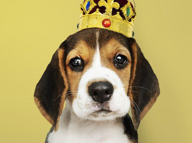 Rodowód psa – czym jest, jak go wyrobić i ile kosztuje?