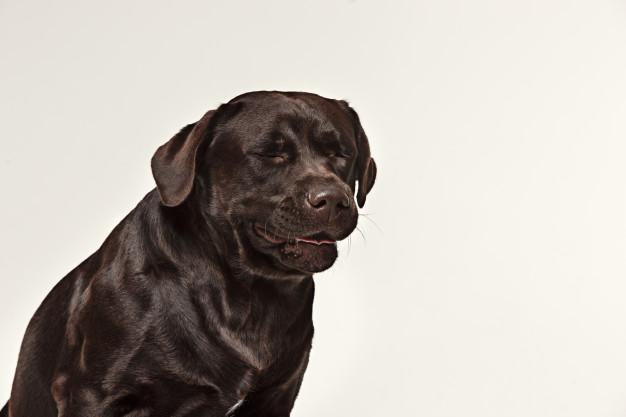 Krew w kale psa – co może oznaczać? Przyczyny i leczenie