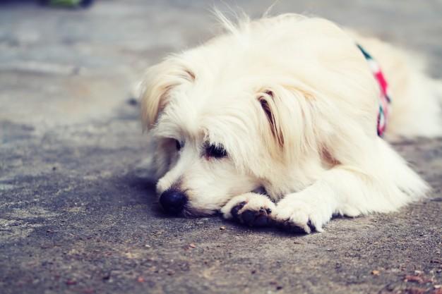 Robaki u psa – główne objawy i jak sobie radzić z pasożytami?
