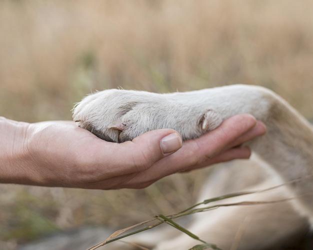 obcinanie psich pazurow