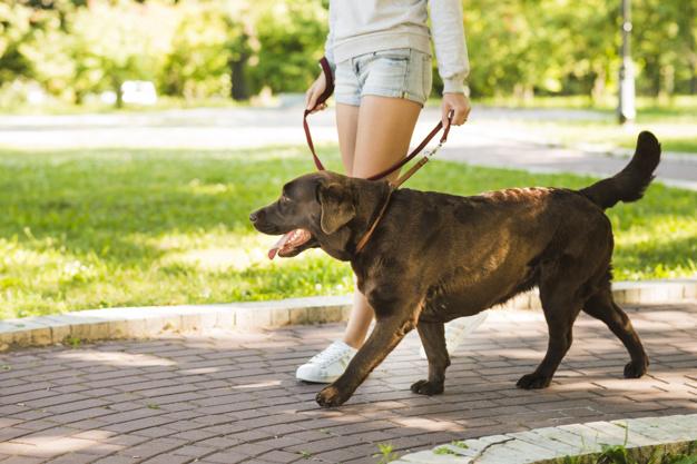 pies na smyczy w parku