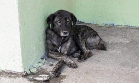 smutny pies lezy na ziemi