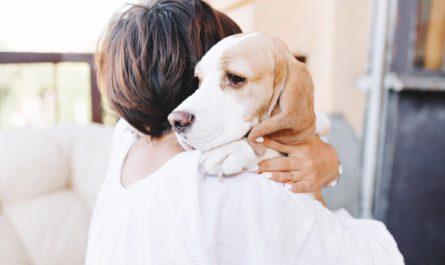 pies na ramionach wlascicielki