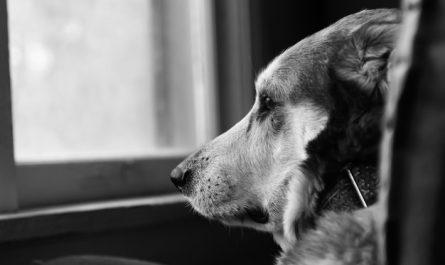 pies z depresja