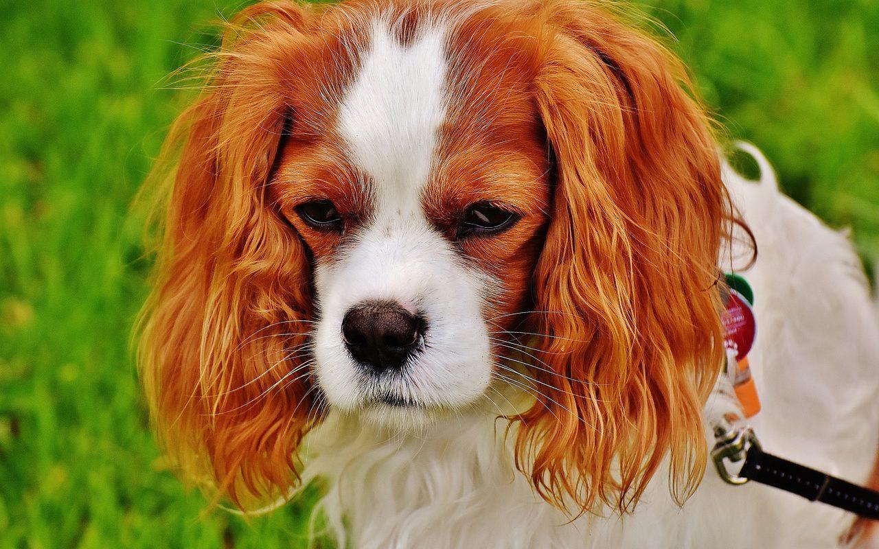 pies z niestrawnoscia