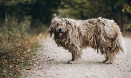 smierdzacy pies