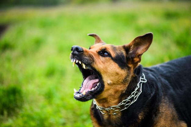 gryzacy pies