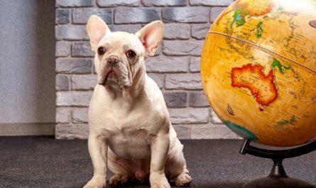 pies na tle globusa