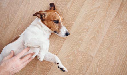 burczenie w brzuchu psa