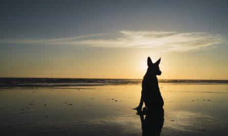 psie niebo za teczowym mostkiem