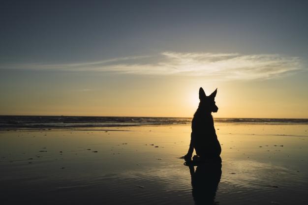 Tęczowy most – czym jest psie niebo?