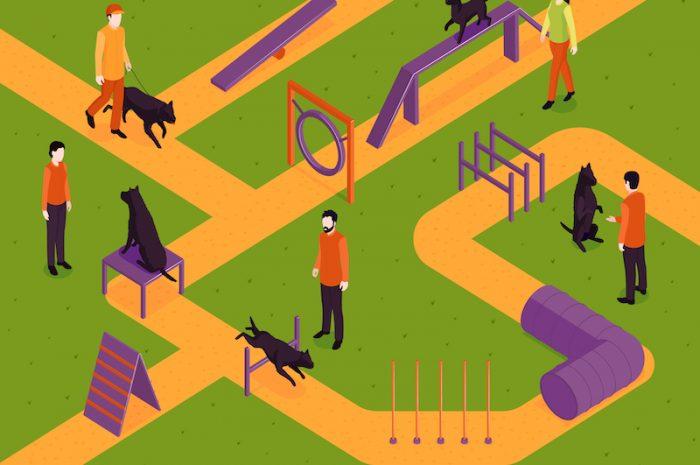Tresura psa – jak i kiedy szkolić psa