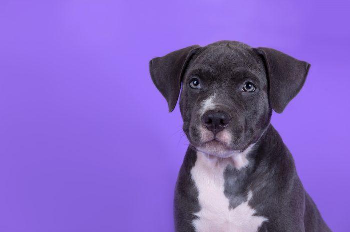 Łzawiące oko u psa, czyli czym są zacieki pod oczami u psa
