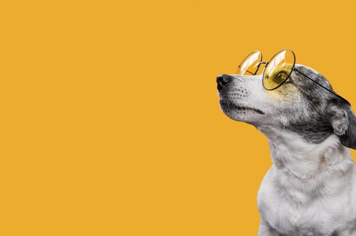 Charakter, cechy i psychika psa