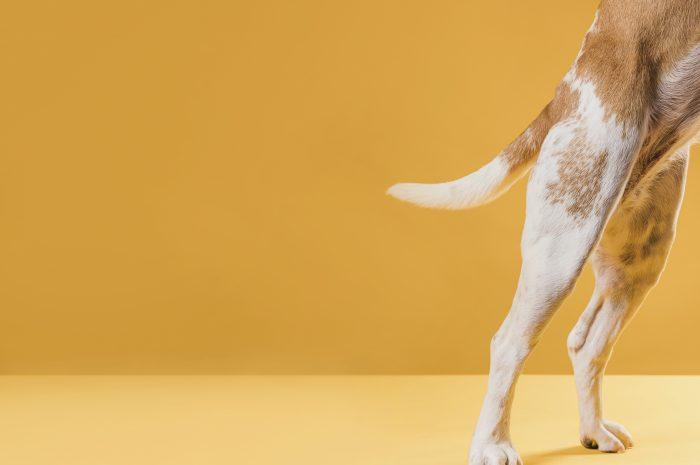 Złamana łapa u psa – objawy, ile czasu zrasta się kość?