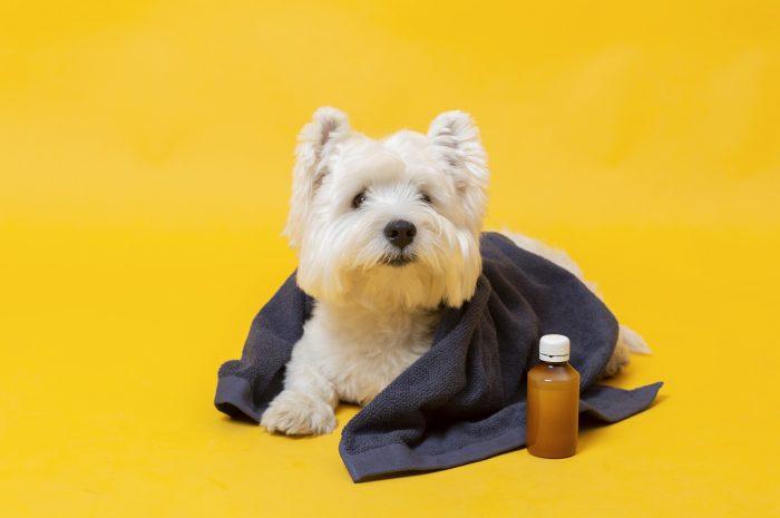 Krew w moczu u psa – co robić kiedy pies sika krwią?