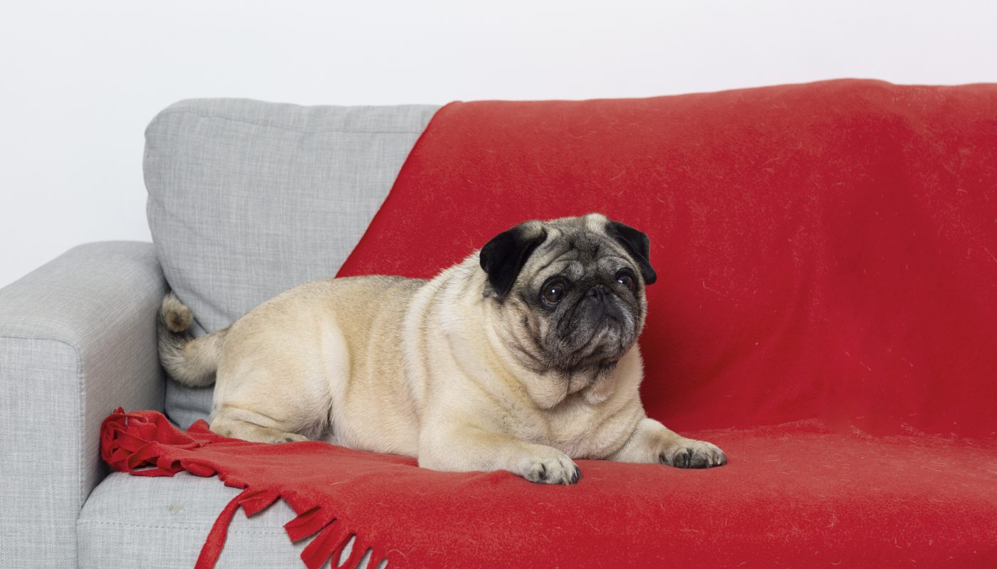 mops na kanapie