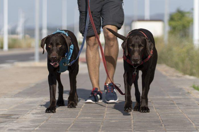 Duże rasy psów – poznaj nasze TOP 8