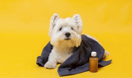 maly pies chory na zoltaczke