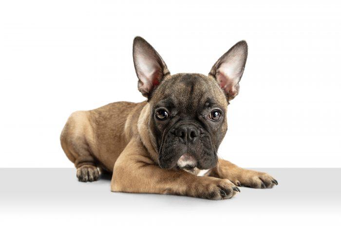 Odleżyny u psa – czym są i jak leczyć?
